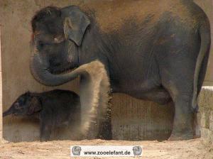 Saphira mit Mutter Sayang