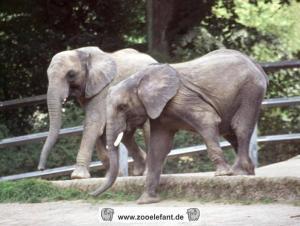 Sweni (September 2002)