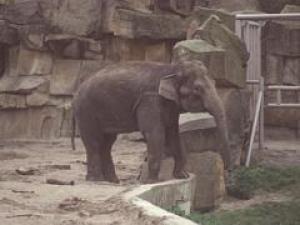Frosja (April 2000)