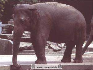 Iyoti (August 1995)