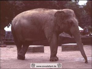 Mogli (August 1995)