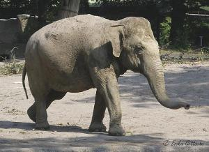 Mogli (2006)