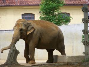 Burma (Mai 2008)