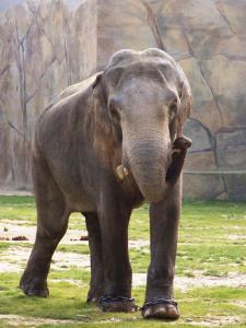 Bindu (Oktober 2007)