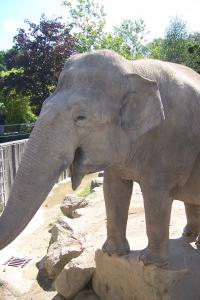 Tefi (August 2007)