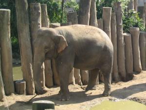 Ratna (August 2005)