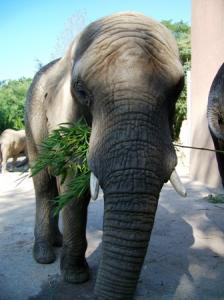 Etosha (August 2007)