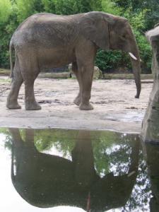 Saiwa (August 2007)