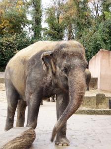 Indra (November 2007)