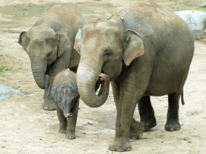 Pang Pha mit ihren Töchtern