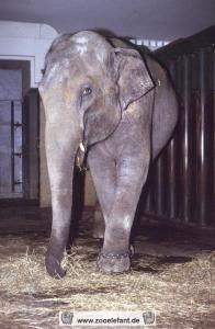 Indra (1987)