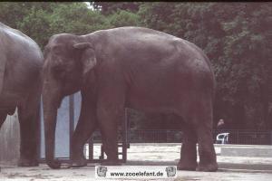 Indra (1995)