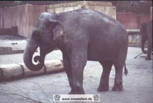 Indra (1997)