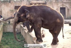 Indra (2000)
