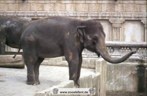 Indra (2001)