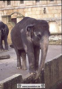 Indra (2002)