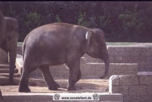 Manari (1999)