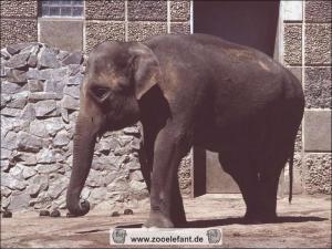 Birma (1990)
