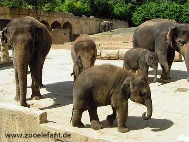 Nachwuchs im Zoo Hannover