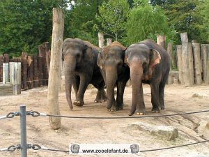 Drei Elefanten in Münster