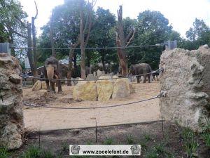 Elefanten im Außengehege