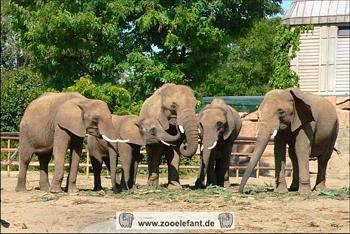 Afrikanische Elefanten im Tierpark Berlin