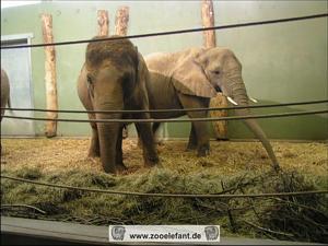 Elefanten im Zoo Augsburg